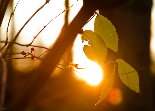 Sun & Leaves