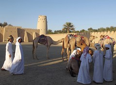 Caring for the camels