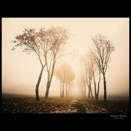 autumn trees light leaves forest woodland woods hungary niceshot természet fa táj köd tájkép út ősz idream canonsx10 bestcapturesaoi