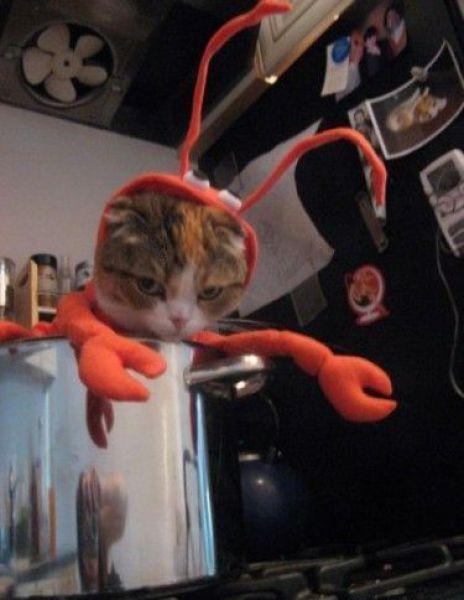 lobstra