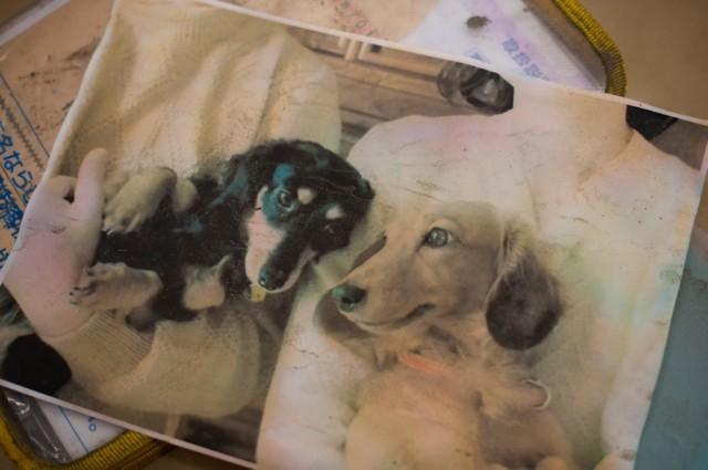 全壊した実家で見つけた唯一の写真には、両親と愛犬2匹が写っていた。