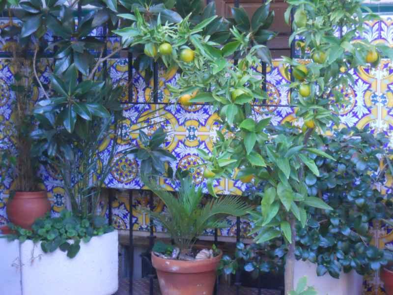 Jardín andaluz la soleá 2