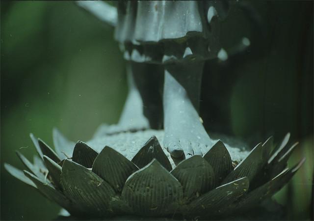 lotosnye-stopy