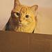 cat + box = catbox