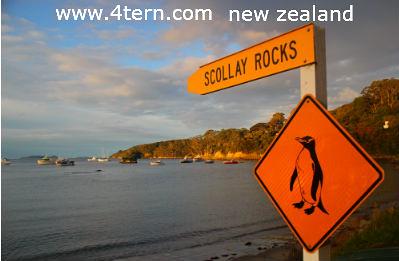 纽西兰打工度假-琐碎的准备工作