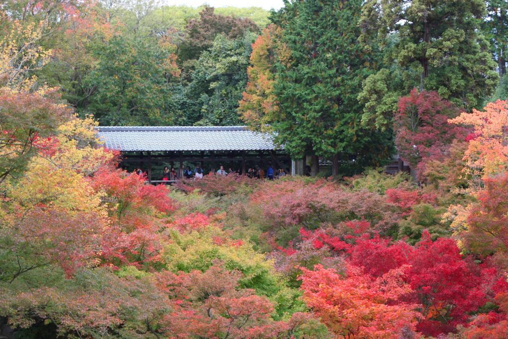Kyoto Rakunan Guide (4)