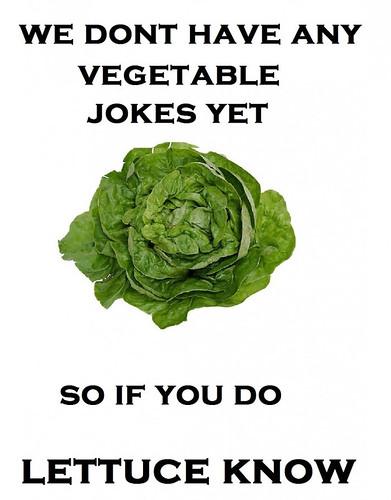 111228 lettuce
