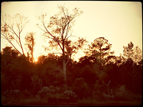 view sunsets northcarolina wilmington brownbetty analogapp