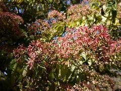 日, 2010-11-07 13:13 - New York Botanical Garden (Bronx) ブロンクスの NY植物園 紅葉