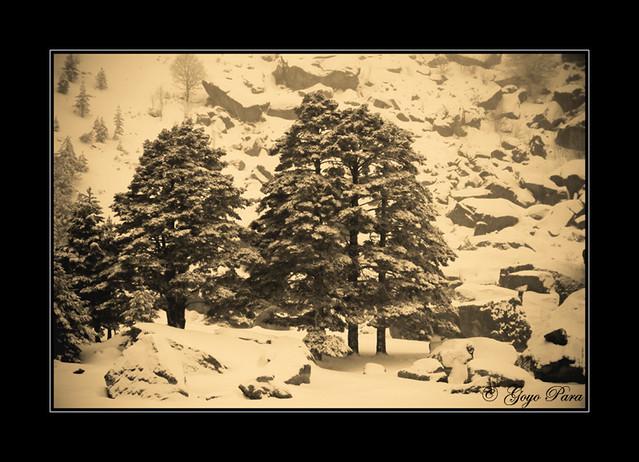 Foto invernal