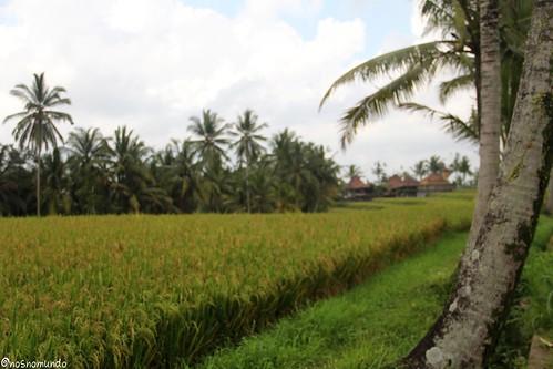Arrozais em Ubud