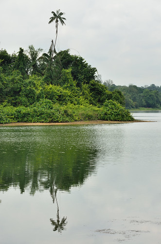 MacRitchie Reservoir shore