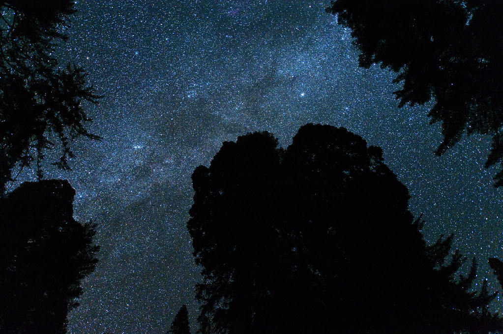 Milky Way above the Grant Grove (Kings Canyon National Park)