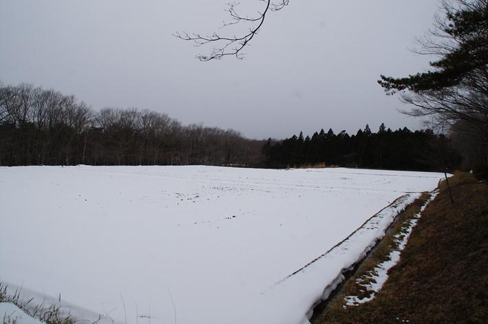 雪で覆われた田園