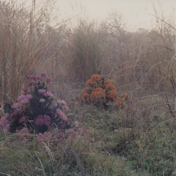 amira-fritz-flowers-contrast_thumb
