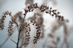 winter flowers 021