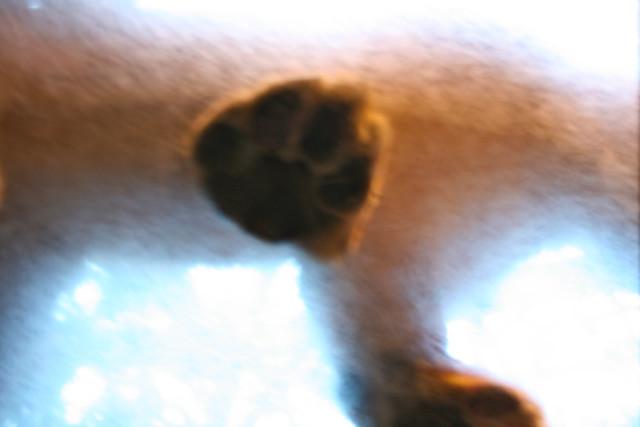 Big paw