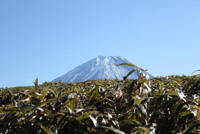 笹の葉ごしの富士山