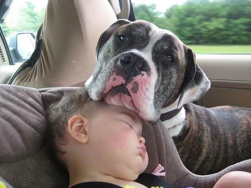 kids and pets.jpg 11