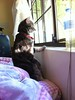 catman-windowwatching