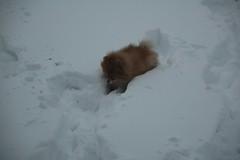 January 18, 2012 Snow