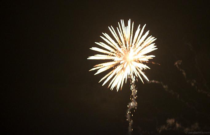 dandelion firework