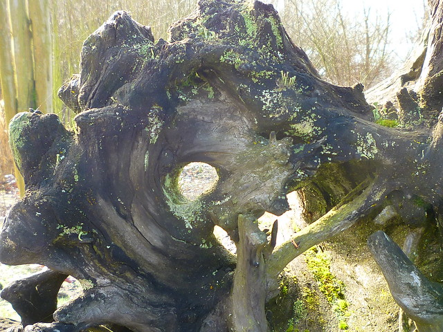 bottom of a tree