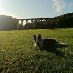 Dog Porthkerry Park Viaduct