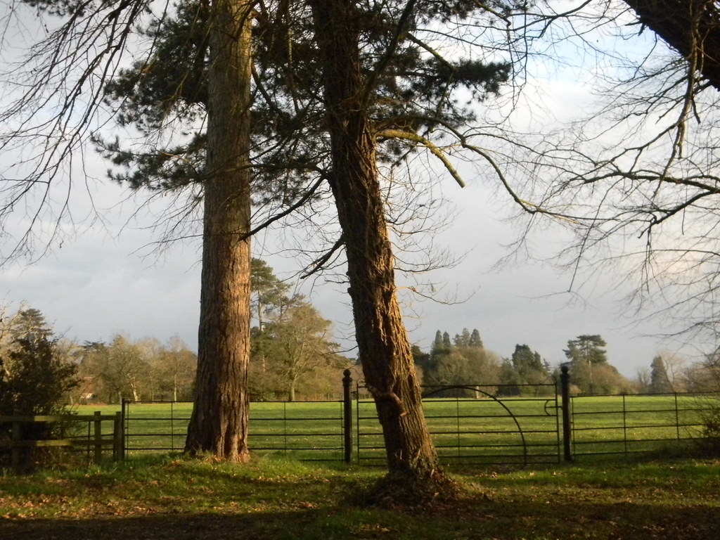 Trees with view - Bucklebury Place Aldermaston to Woolhampton