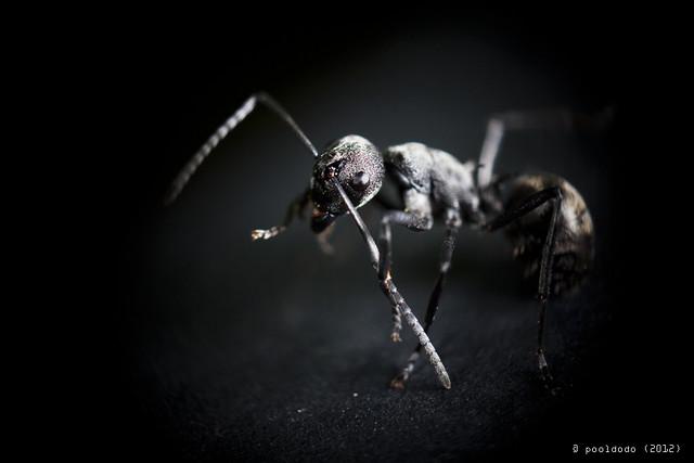 [macro] dancing ant