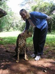 Sue strokes leopard in Nairobi