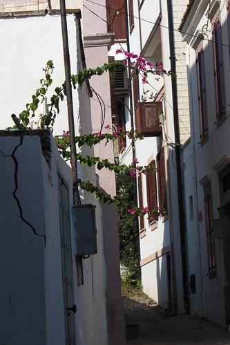 Burhaniye day 2 (Ayvalik): way with pink flowers