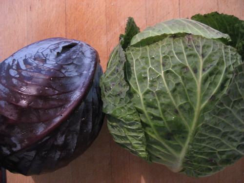 Cabbages for coleslaw