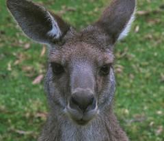 Australia 2011 - The Grampians