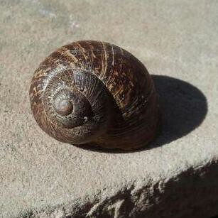 Snail in the Sun by Jodi K.