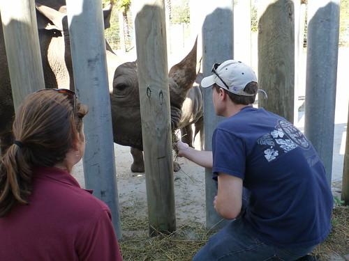Me Feeding White Rhino