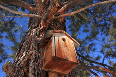 branch, wood, tree, birdhouse, nature,