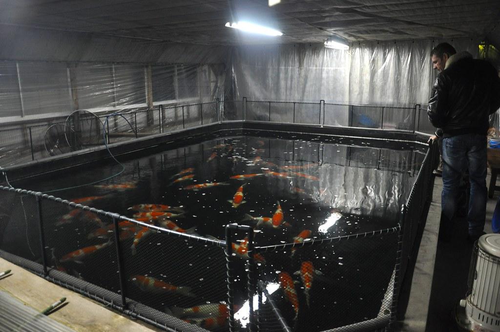 Yamatoya's main indoor pond