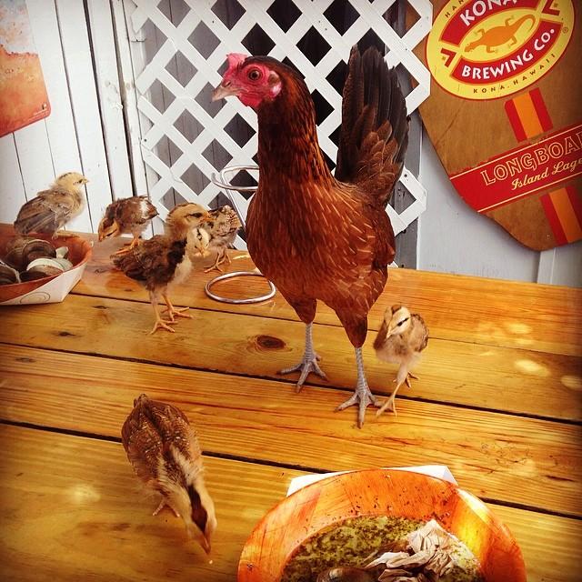 #wheninKeyWest #KeyWest #chicken