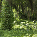 Uma Floresta Encantada...