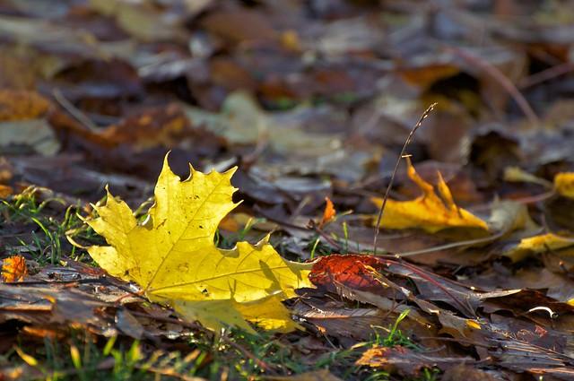 Rising Leaf
