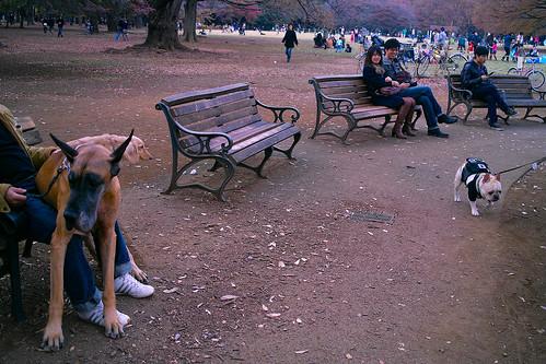 Yoyogi Park by RioLaaa
