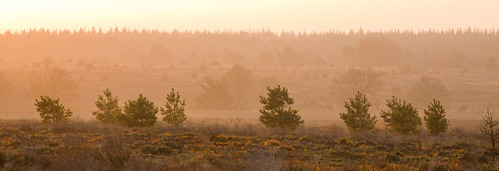 morning sunlight netherlands sunrise heather nederland fields pinetrees overijssel salland nijverdal sallandseheuvelrug