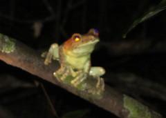 Guyana-3096