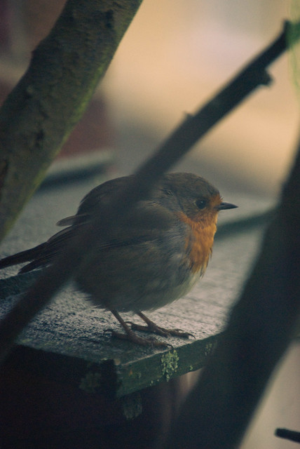 261111_ hello mr robin #1