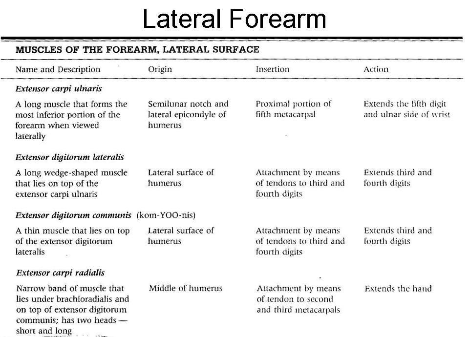 9. Lateral forelimb OIA