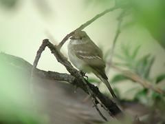 wren(0.0), hummingbird(0.0), flower(0.0), nightingale(1.0), animal(1.0), perching bird(1.0), branch(1.0), nature(1.0), macro photography(1.0), green(1.0), fauna(1.0), close-up(1.0), emberizidae(1.0), beak(1.0), bird(1.0), wildlife(1.0),