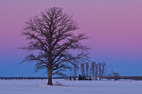 winter usa snow tree field landscape twilight wind michigan i75 rudyard chippewacounty windchill centerlineroad 49780