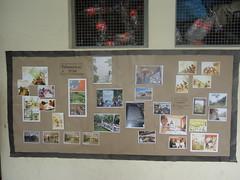 Lefferts Animal Hospital | Pet Grooming | 11418 | Richmond Hill | 2