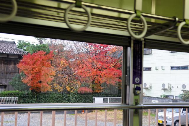 窗外到處都有紅葉